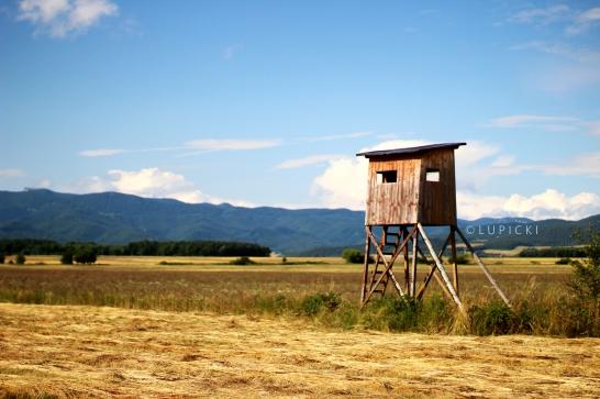 house-in-field